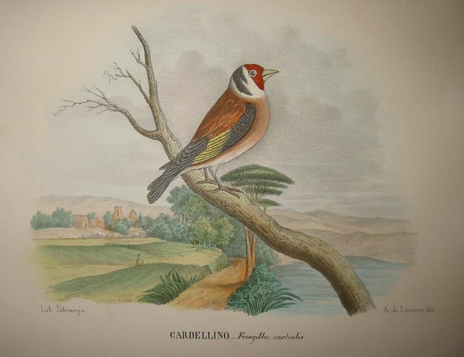 Boschi Giovanni Cardellino 1863 Napoli