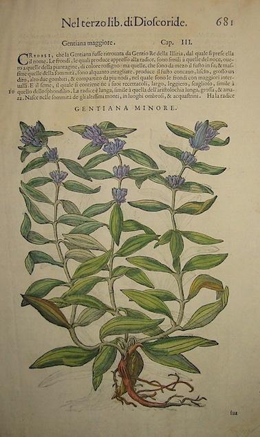 Mattioli Pietro Andrea (1501-1578) Gentiana minore 1589 Venezia