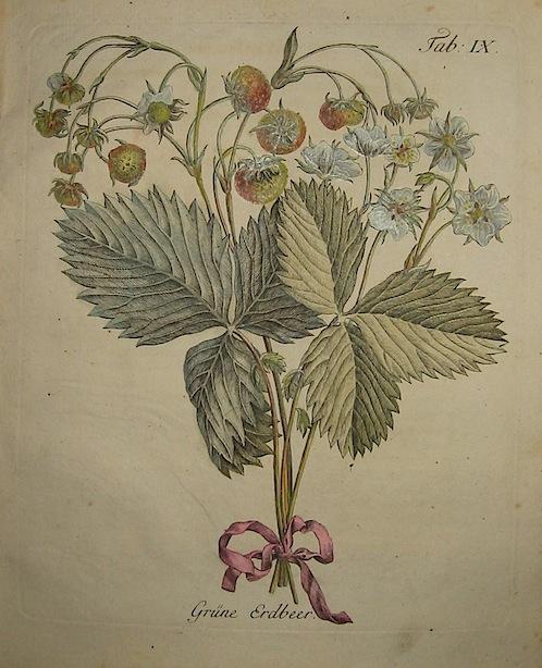 Duhamel du Monceau Henri Louis (1700-1782) Grune Erdbeer 1777 Norimberga