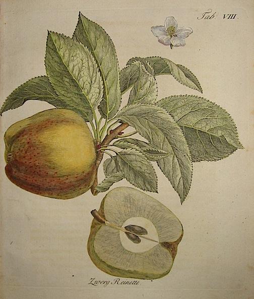 Duhamel du Monceau Henri Louis (1700-1782) Zwerg Reinette 1777 Norimberga