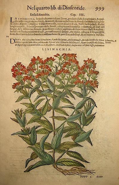 Mattioli Pietro Andrea (1501-1578) Lisimachia 1589 Venezia