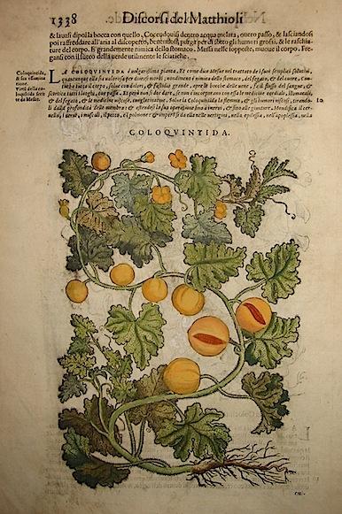 Mattioli Pietro Andrea (1501-1578) Coloquintida 1589 Venezia