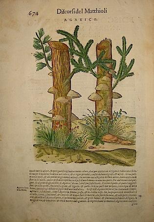 Mattioli Pietro Andrea (1501-1578) Agarico 1589 Venezia