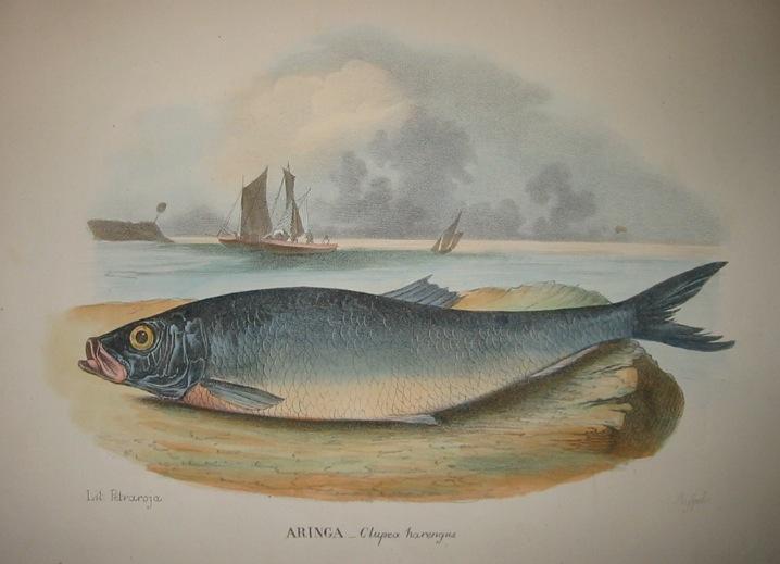 Boschi Giovanni Aringa 1863 Napoli